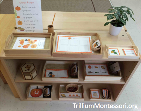 Pumpkin-Patch-Phonological-Awareness-Shelf-in-a-Montessori-Classroom