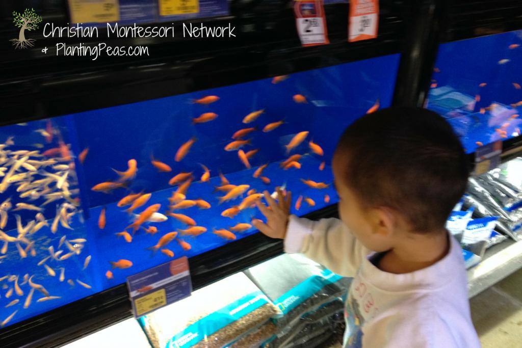 Montessori Inspired Kids Bible Activities - Jesus Feeds 5000 Pet Store Field Trip