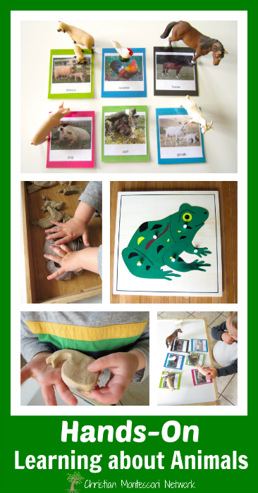 Please enjoy six different kid friendly activities for hands-on learning about animals that help support the Creation story found in Genesis. - ChristianMontessoriNetwork.com