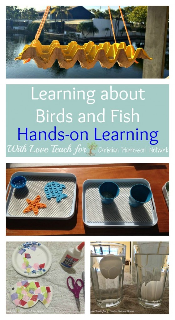 FUN hands on learning to help children understand God's creation of birds and fish by With Love Teach on ChristianMontessoriNetwork.com