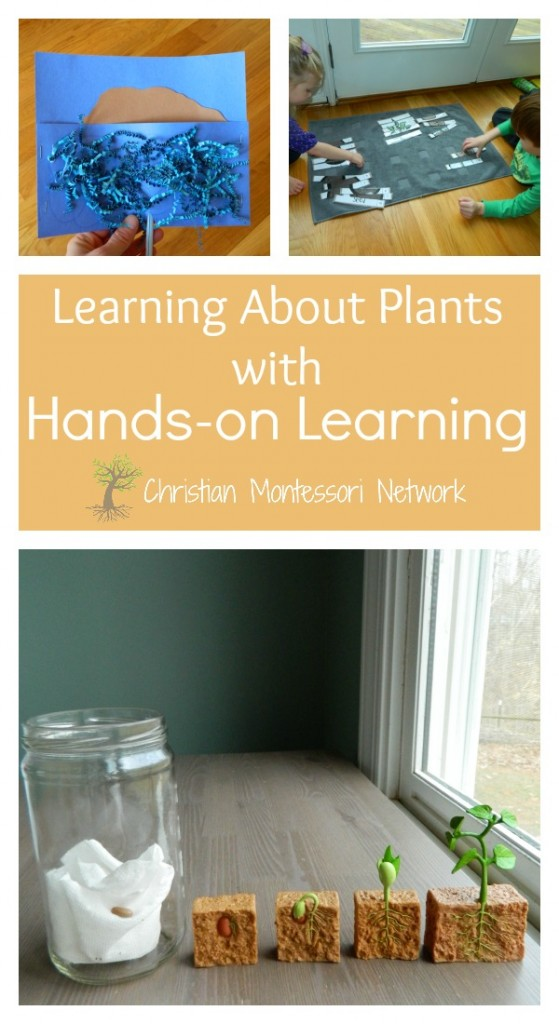 Exploring God's creation of land and vegetation with hands-on learning on ChristianMontessoriNetwork.com
