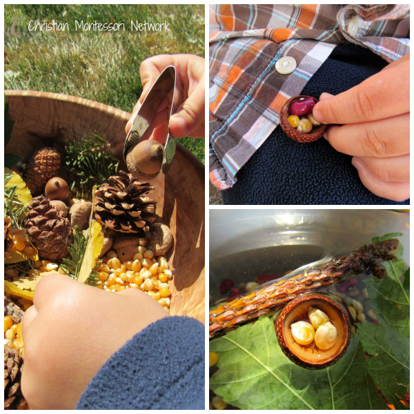 Acorn Tops - ChristianMontessoriNetwork.com
