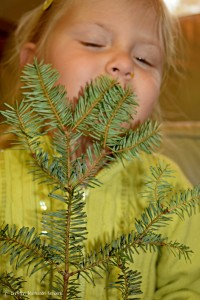 The smell of a fir tree is unmistakable! Explore with the sense of smell this holiday season.