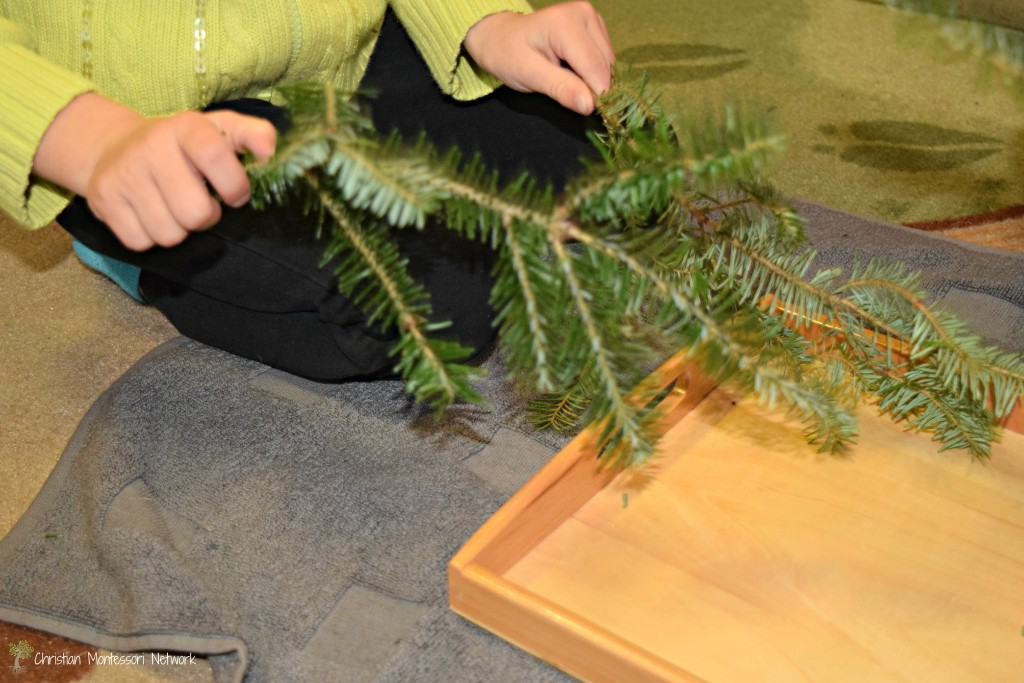 Explore fir tree with sound