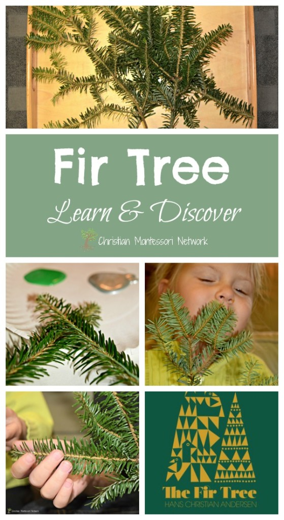 Fir Tree Learn and Discover on Christian Montessori Network