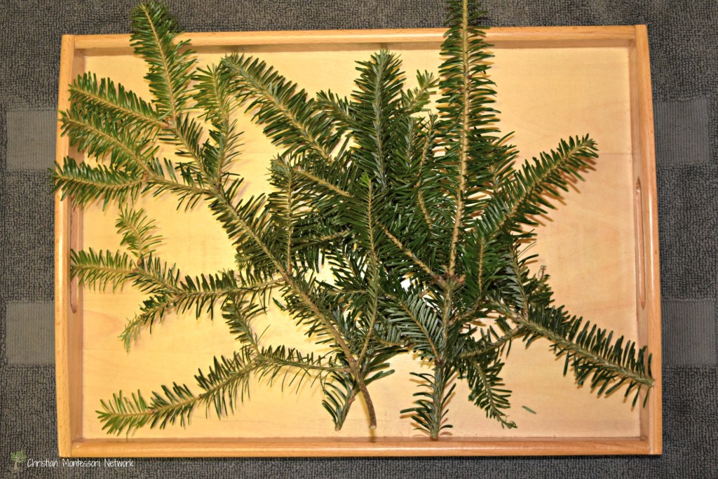Fir tree exploration is perfect for this time of year. Easy set up and clean up top!