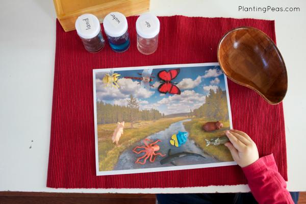 Montessori land water air activity - sorting animals (planting peas)