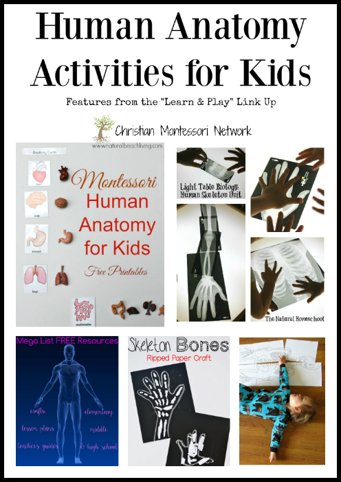 Human Anatomy - www.christianmontessorinetwork.com